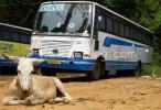 aanavandi-ksrtc-bus