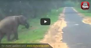 chinnar_elephants