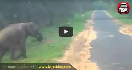 Elephants Crossing Road at Chinnar