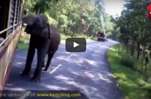 ksrtc_elephant