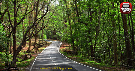 Chalakkudy – Malkkappara : A Journey through forests